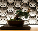 Kumo Restaurant Bonsai