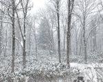 Big Snow In November2019 3