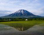 Local Rice Field00001