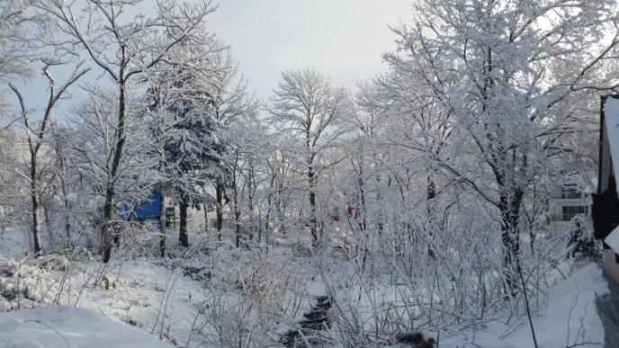 A snowy creek in the Niseko winter wonderland