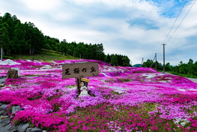 2017 Hdr Shibazakura Mishima Sans Garden Kutchan Town 4