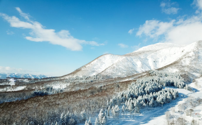 Drone Blue Skies Winter Trees 01 11 18 4