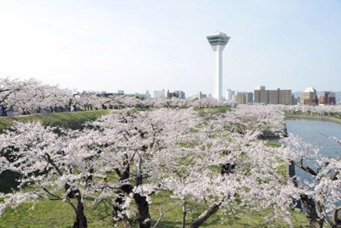GORYOKAKU-SAKURA