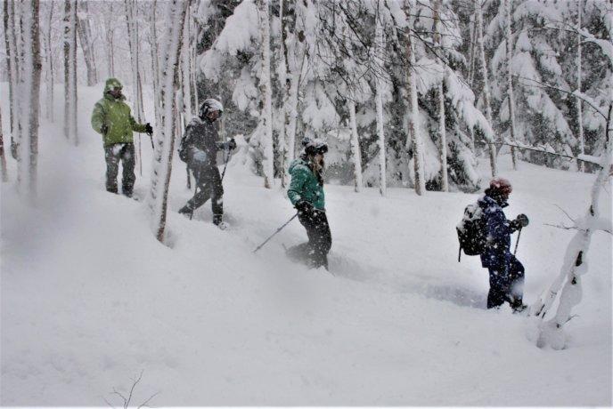 Nac Snowshoeing Niseko Day Time Snowshoe 29 Edit