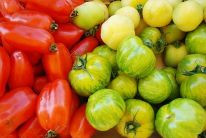 Niseko Green Farm Tomatoes