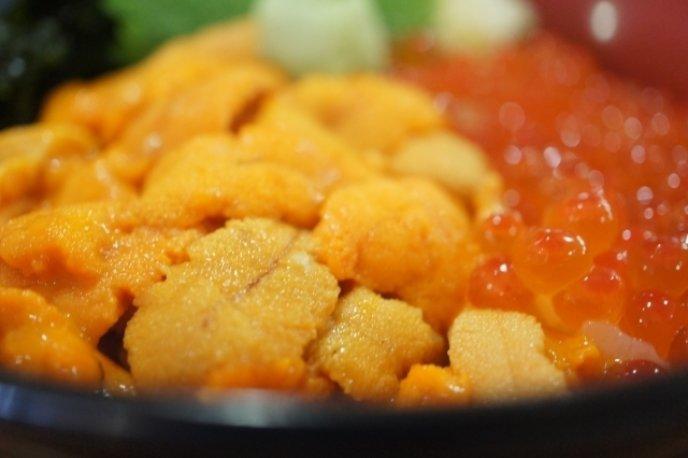 Sea Urchin 1