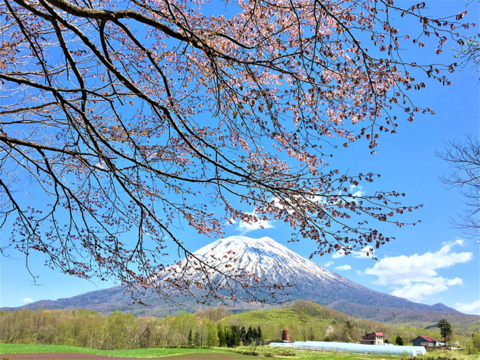 Beautiful Scenery Of Niseko Spring 2017 5