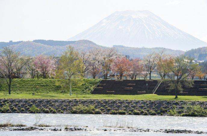 Rankoshi Ranran Park 1 Spring River Riverside Sakura Cherry Blossoms