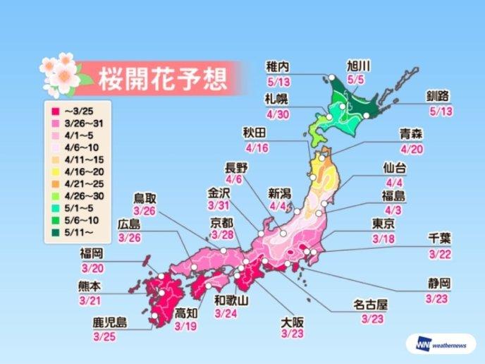 Sakura Cherry Blossom Predict 2019