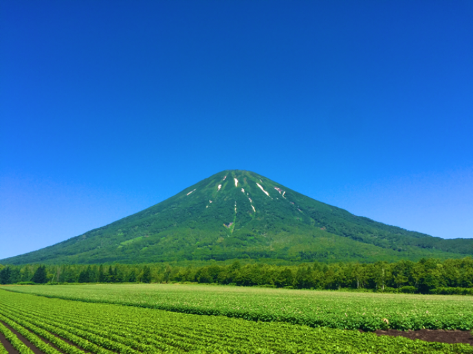 Summer in Niseko, endless green