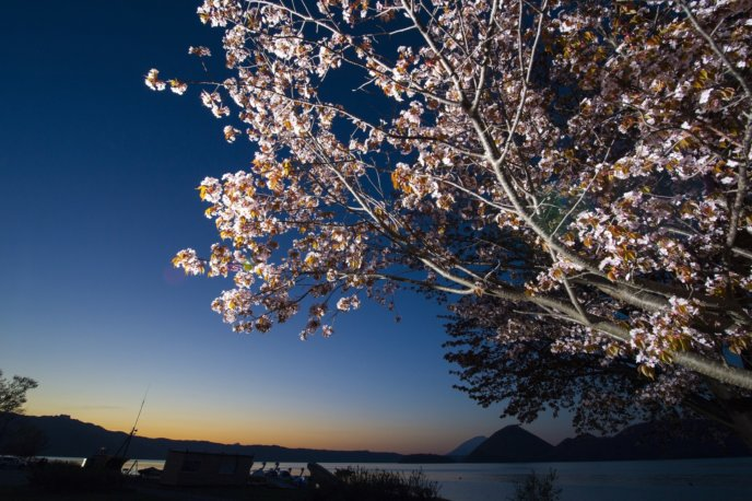 Toya Lake 4 Sunrise Sakura Cherry Blossoms Spring