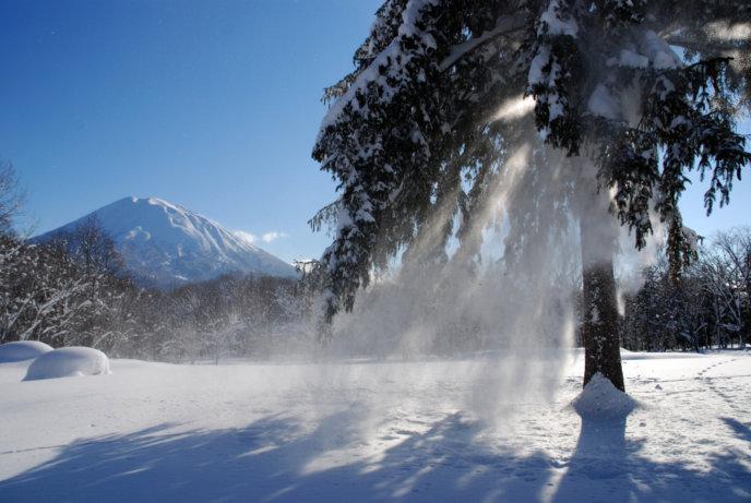 Winter Powder Youtei Tree Snow Falling