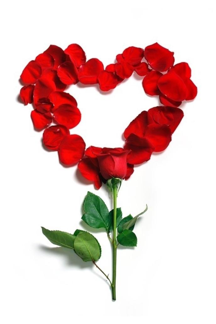 Rose 1215314 960 720