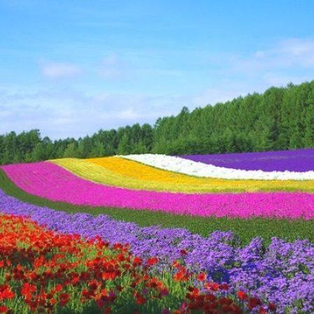 When to See Blooming Flowers in Hokkaido