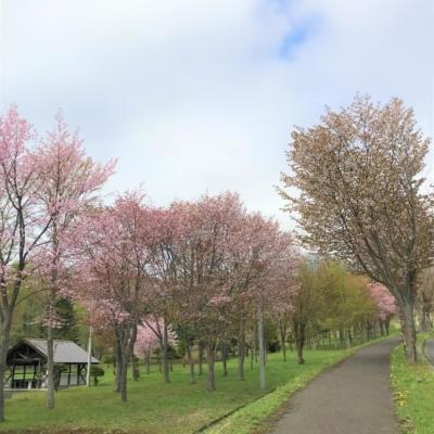 Outdoor Center At Niseko Shinrin Park