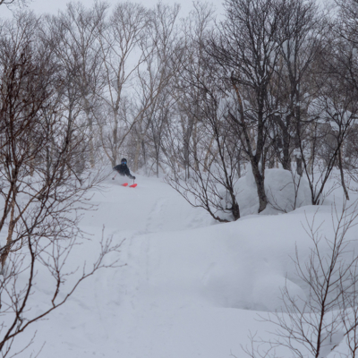 Tree skiing in Japan - how good is this!?
