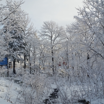 A snowy creek in the Niseko winter wonderland