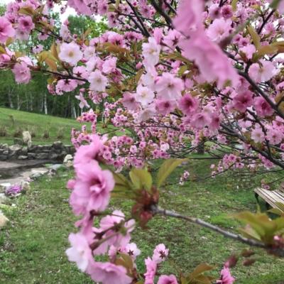 2017 05 22 Hirafu Niseko Spring Clean Up 16