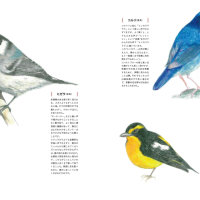 日本語セクション:フォレストレック矢吹さんによるニセコの野鳥