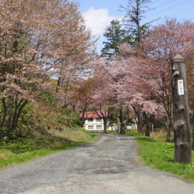 Koikawa Ryokan Onsen Spring Sakura Approach