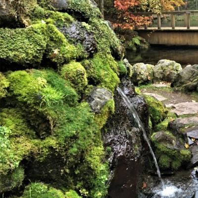 Fukidashi Park Water Spring In Autumn