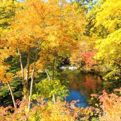 京極町ふきだし公園紅葉