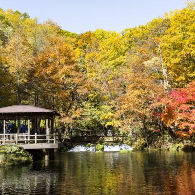 ふきだし公園の紅葉