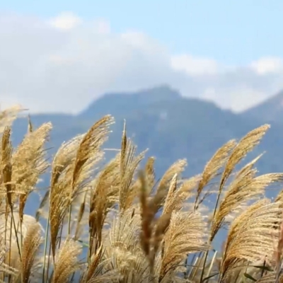 Kutchan Tourism Association Kutchan Niseko 4 Season Video 9