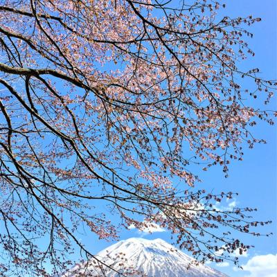 Beautiful Scenery Of Niseko Spring 2017 2