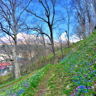 Beautiful Scenery Of Niseko Spring 2017 3