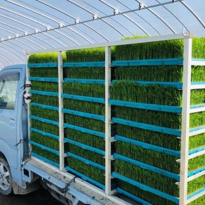 苗をトラックで運びます