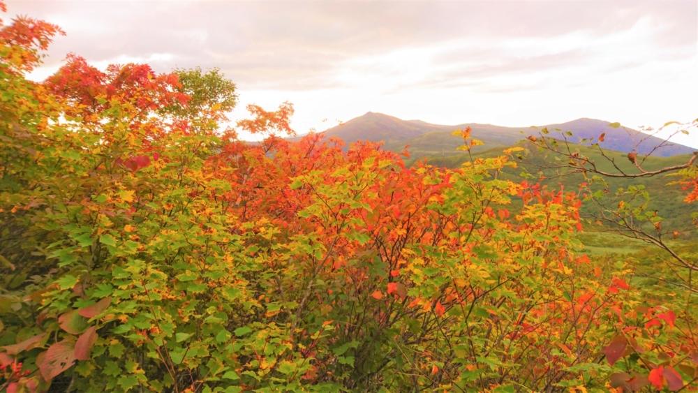 Autumn colours at Shirakabayama, Niseko.