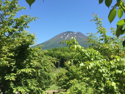 Niseko Senbon Zakura In Arishima Area 1
