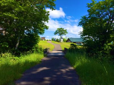 Summer Niseko 3