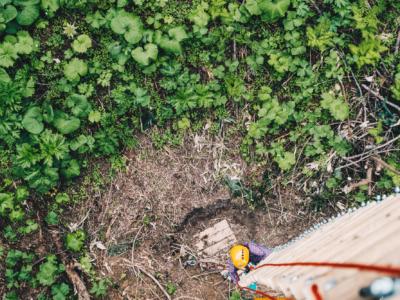 Nac Adventure Park Ladder Climbdown Edit