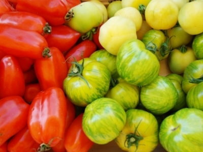 Niseko Green Farm Tomatoes