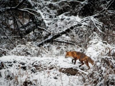 Animal Cold Environment 247395