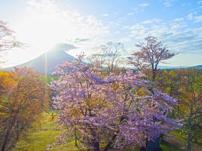 Niseko Toukeien 3 Cherry Blossoms Sakura Mt Youtei Spring Sun