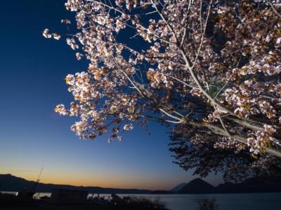 Toya Lake 4 Sunrise Sakura Cherry Blossoms Spring