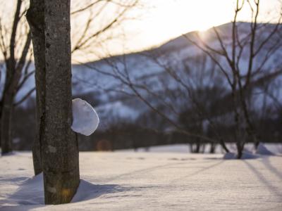 Winter In Niseko